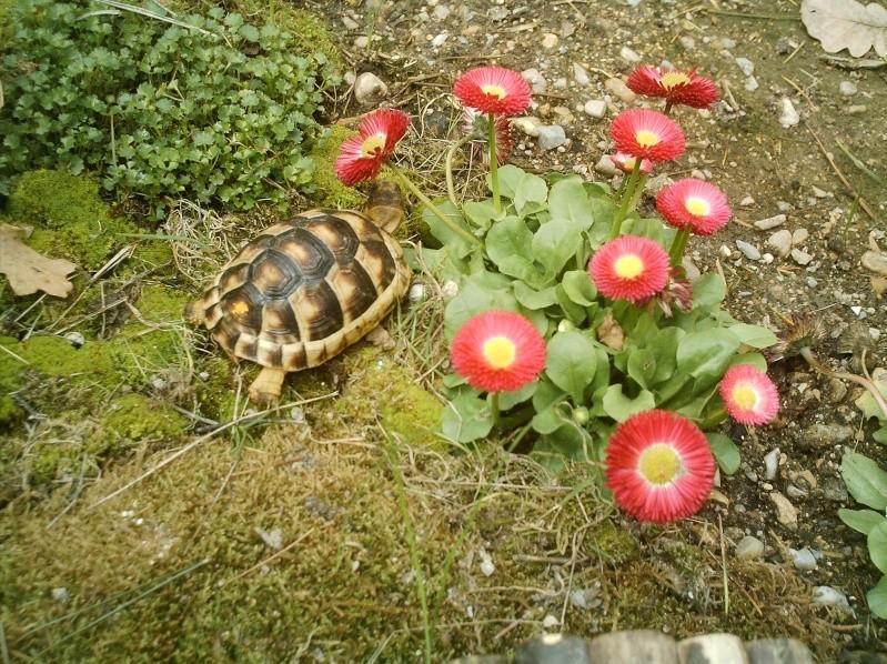 les tortues d eau et de terre(terrestre)... Annive11