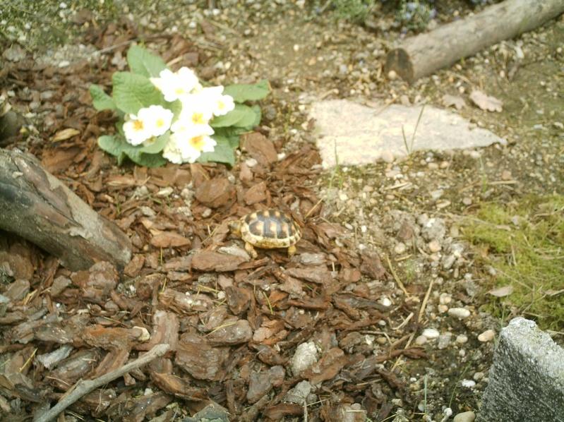 les tortues d eau et de terre(terrestre)... Annive21