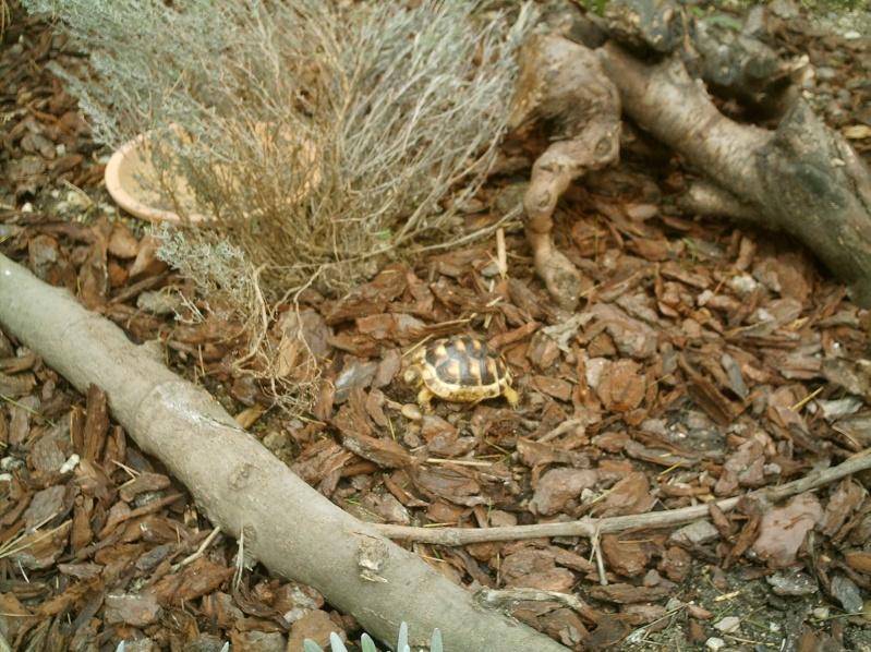 les tortues d eau et de terre(terrestre)... Annive25