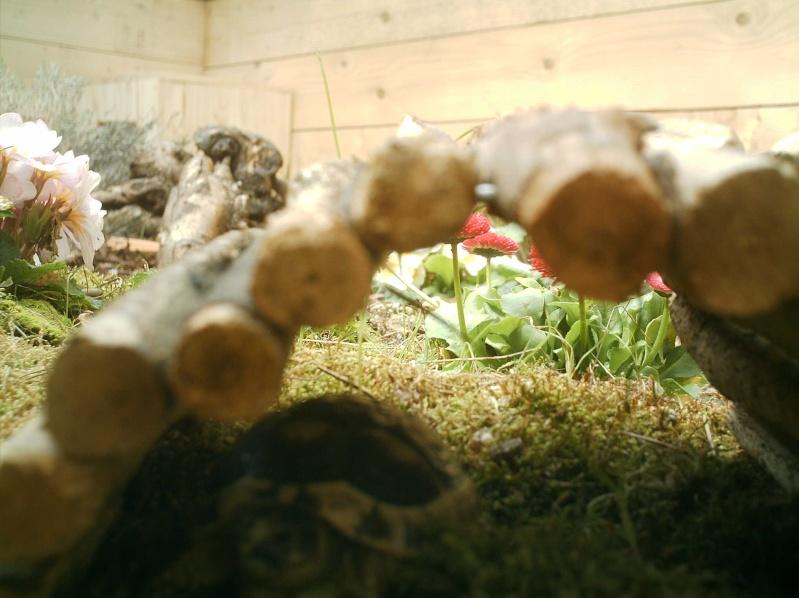 les tortues d eau et de terre(terrestre)... Annive26