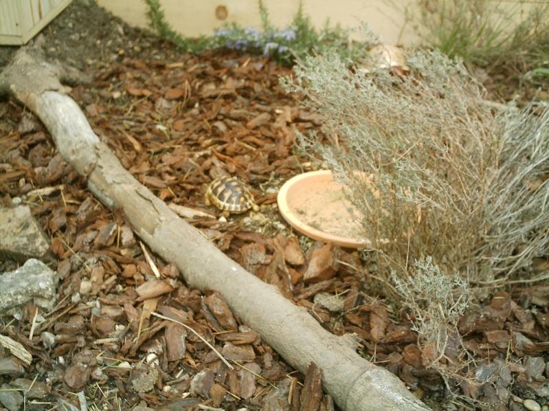 les tortues d eau et de terre(terrestre)... Annive27