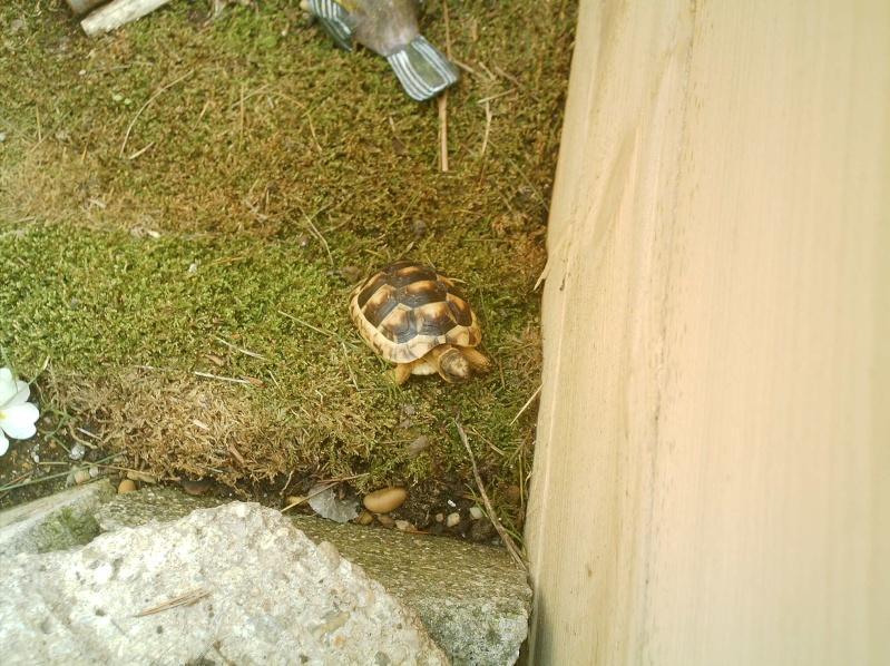 les tortues d eau et de terre(terrestre)... Annive37