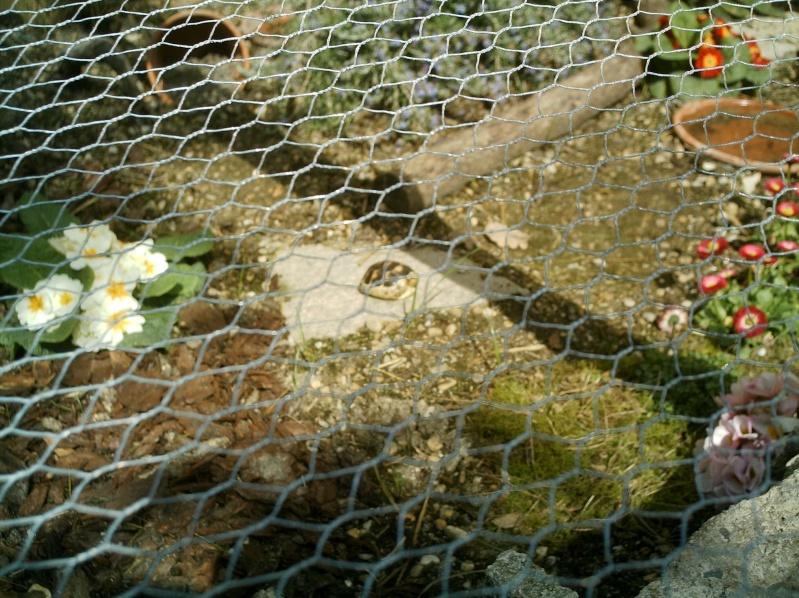 les tortues d eau et de terre(terrestre)... Annive45