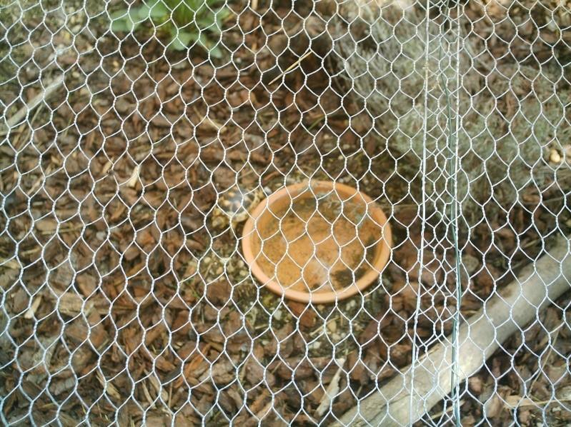 les tortues d eau et de terre(terrestre)... Annive46