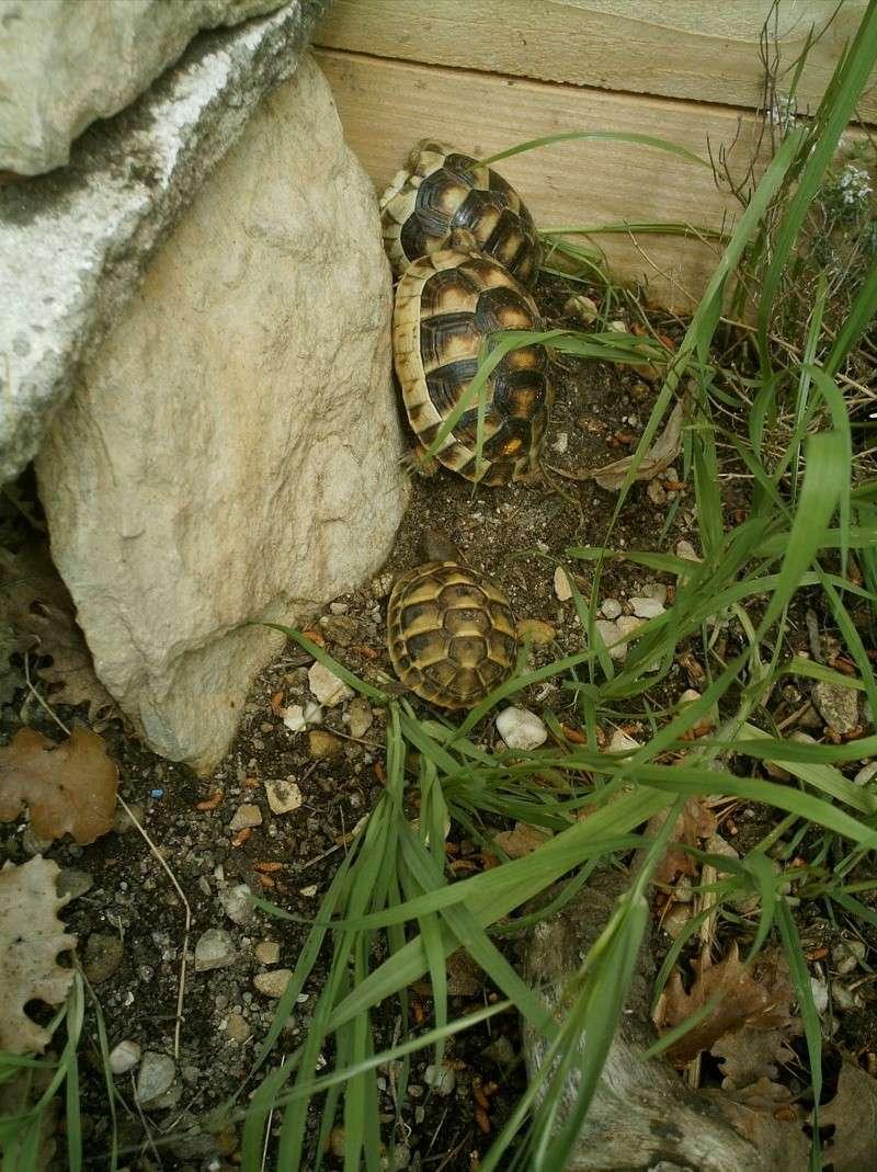 les tortues d eau et de terre(terrestre)... Arrive14