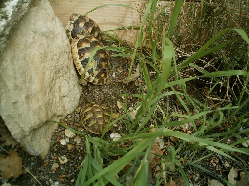 les tortues d eau et de terre(terrestre)... Arrive15