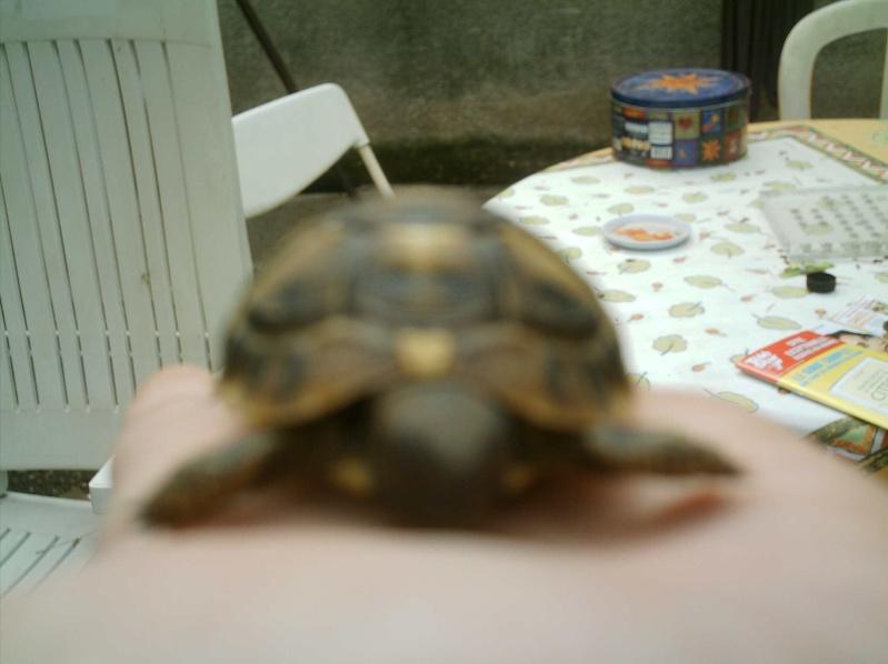 les tortues d eau et de terre(terrestre)... Arrive17