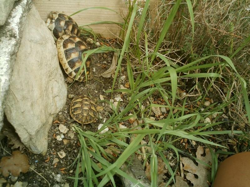 les tortues d eau et de terre(terrestre)... Arrive18