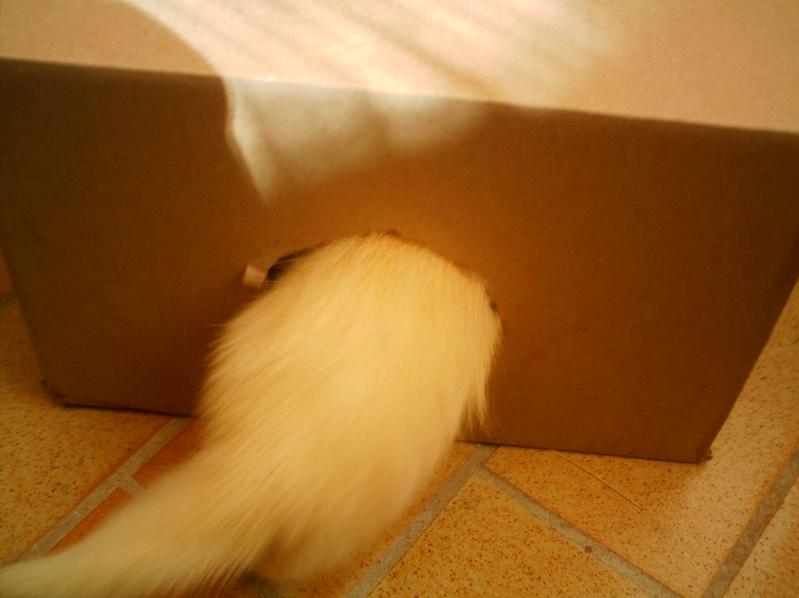 présentation de vos animaux: furets: - Page 10 Flocon16