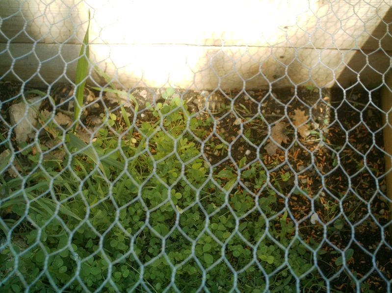 les tortues d eau et de terre(terrestre)... Griott13