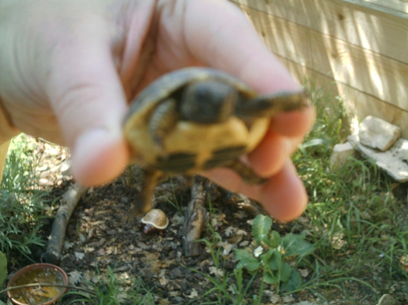 les tortues d eau et de terre(terrestre)... Griott17