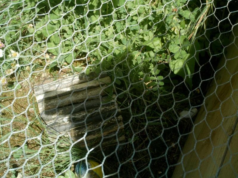 les tortues d eau et de terre(terrestre)... Mes_an48