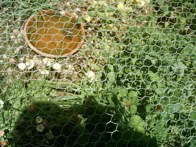 les tortues d eau et de terre(terrestre)... Mes_an52