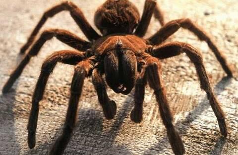 10 choses que vous devez savoir sur la datation d'un Scorpion