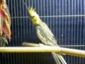 Des oiseaux 310