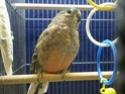 Des oiseaux 510