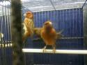 Des oiseaux 610