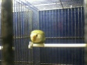 Des oiseaux 910