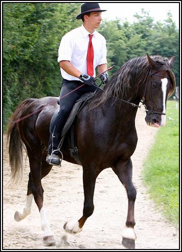 """• Mission """"création de chevaux"""". - Page 3 110"""