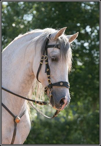 """• Mission """"création de chevaux"""". Barbe10"""