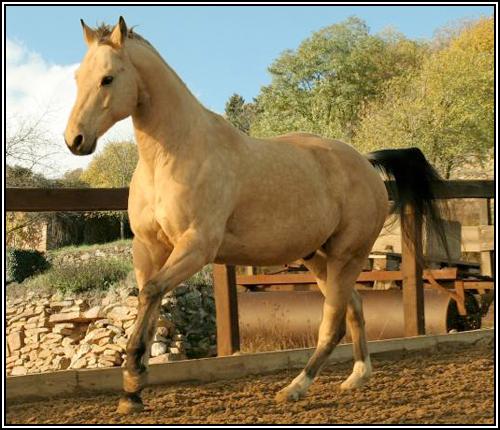 """• Mission """"création de chevaux"""". Lithiu10"""