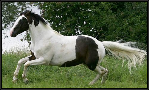 """• Mission """"création de chevaux"""". Paint10"""