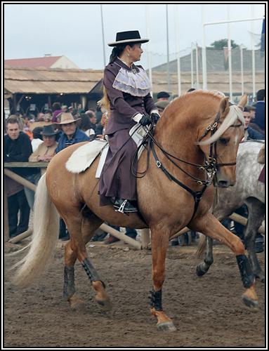 """• Mission """"création de chevaux"""". Palo211"""
