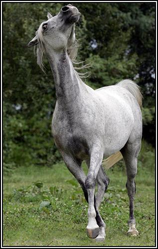 """• Mission """"création de chevaux"""". Psa10"""