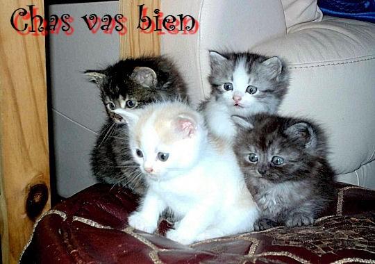 photos insolites d'animaux 11040610