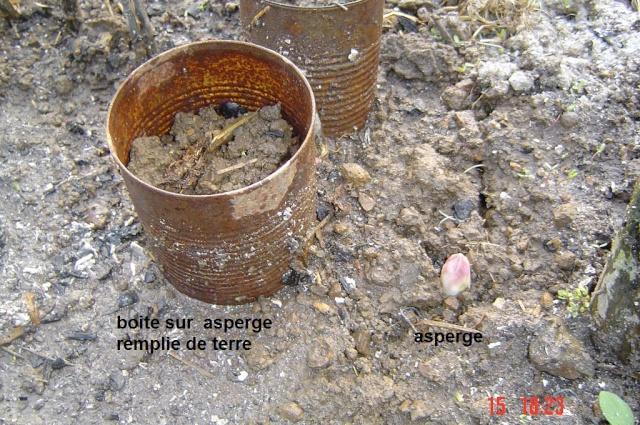 ASPERGES AU  JARDIN Dsc06511