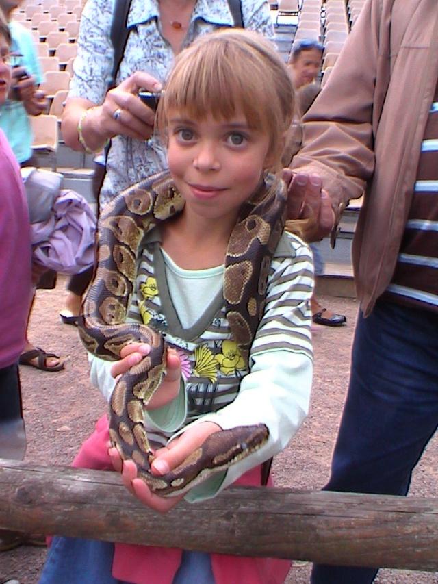 les serpents les plus dangereux du monde Jurque11
