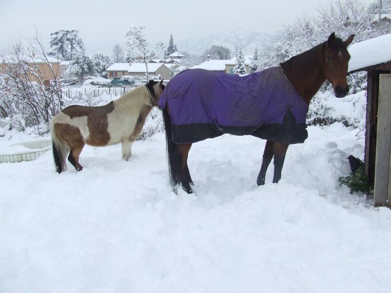 Matériel d'équitation, t.cheval, travail et repos Dscf5510