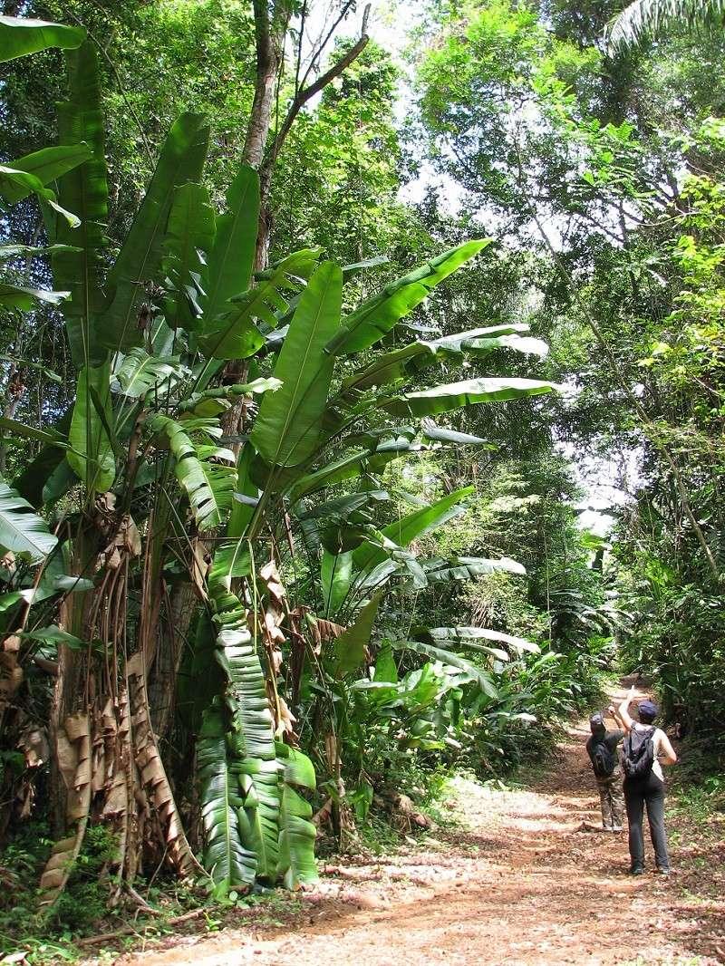 Voyage en Guyane 24110