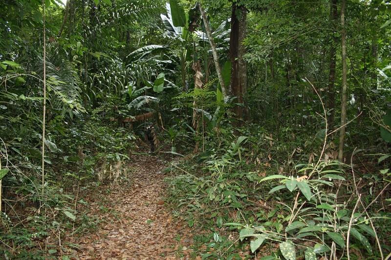 Voyage en Guyane Img_2815
