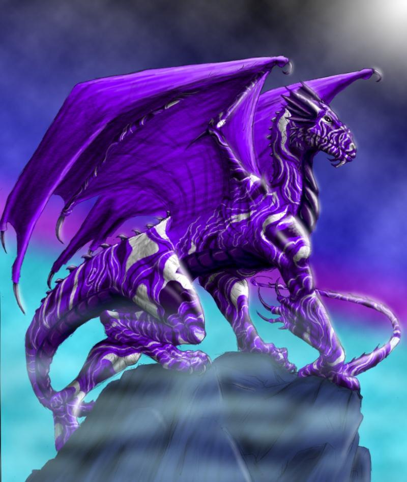 Dragons mauves Amethy10