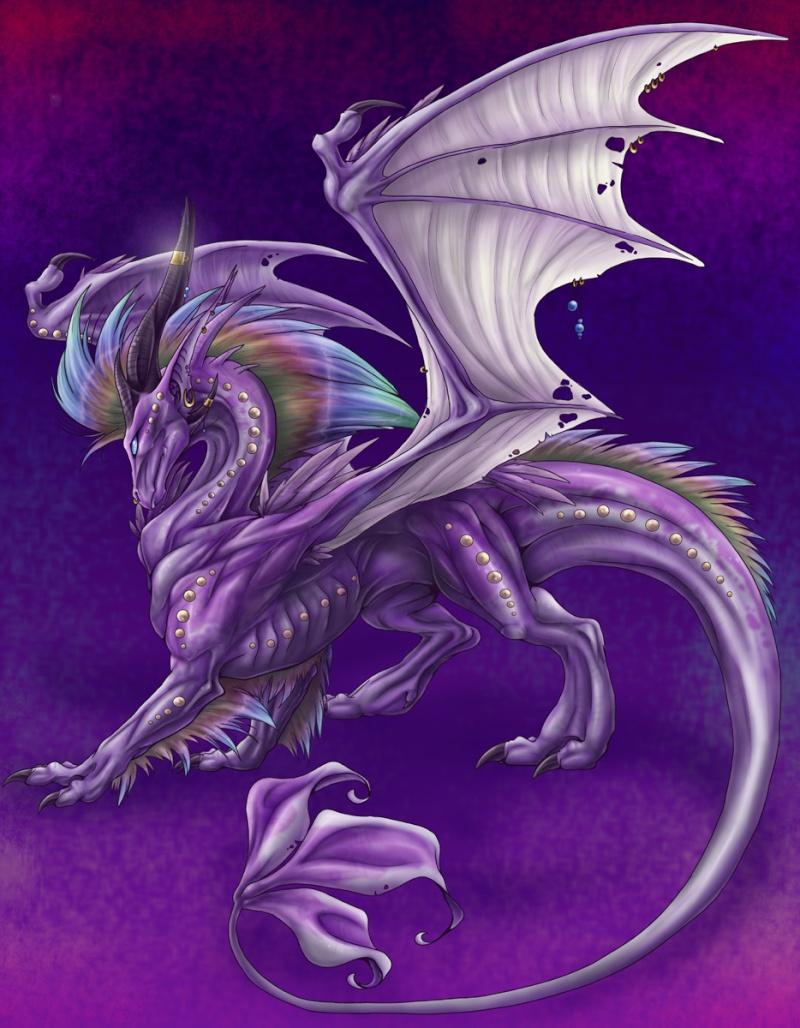 Dragons mauves Dragon10