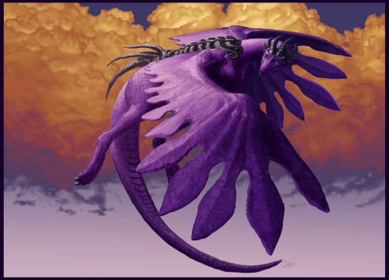 Dragons mauves Draygl10