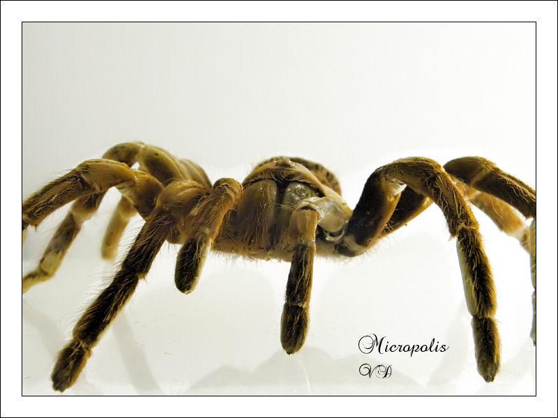 Micropolis Microp12
