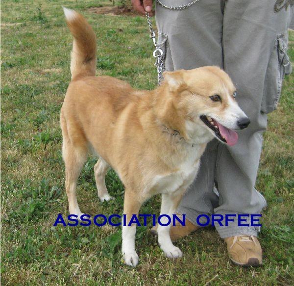 RENATA croisée husky 5 ans (79 ) adoptée Img_2915