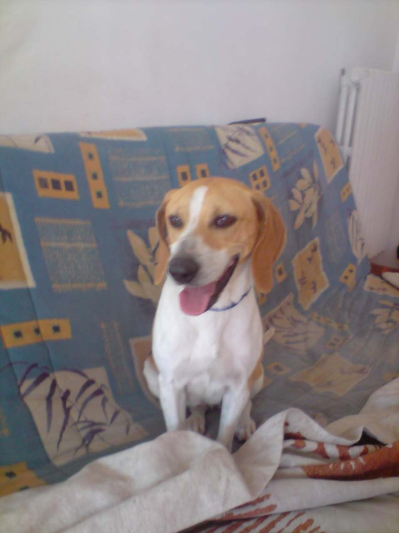 CADIX, anglo français femelle, 3 ans (17) P2404110