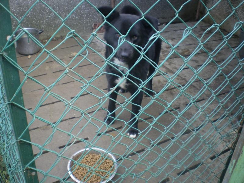 2x labrador2 croisés labrador /husky 3 ans cherche fa pour 2 ou 3 mois ( 49 ) Photo-10