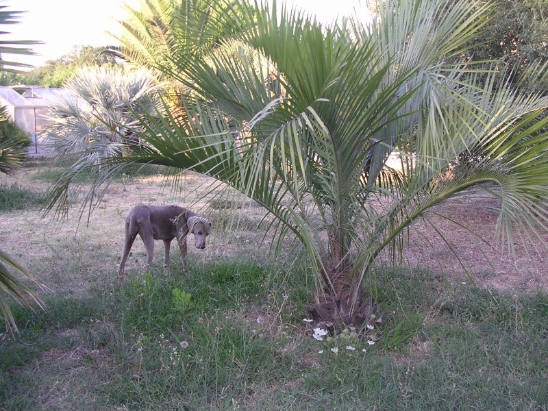 Mes palmiers Dscn7210