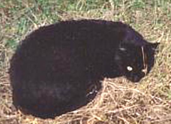 Le chat oscar Minouc13
