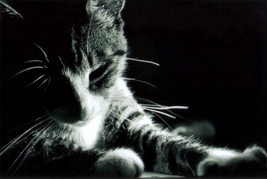 Kishik, chatte-garou Cat_by10