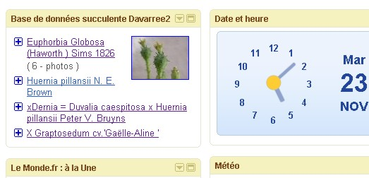 [ Euphorbia Globosa ] Nouvelle fiche Gadget10