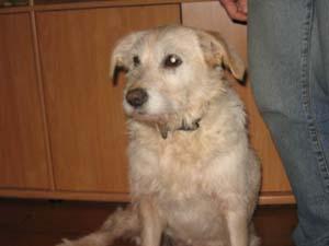 AGRIKA est adoptée (18 janvier 2009) 18janv10