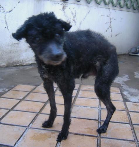 Visite vétérinaire (5 mars 2010) Achill18