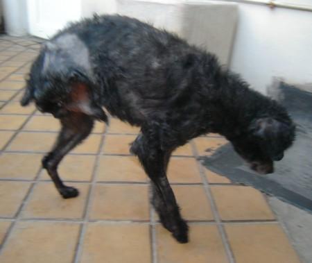 Visite vétérinaire (5 mars 2010) Achill19