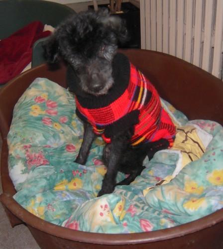 ACHILLE et son manteau (7 mars 2010) Achill25