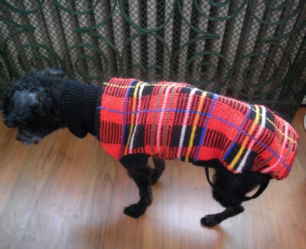 ACHILLE et son manteau (7 mars 2010) Achill28